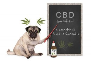 CBD for Dogs | blackbirdfarmsco.com